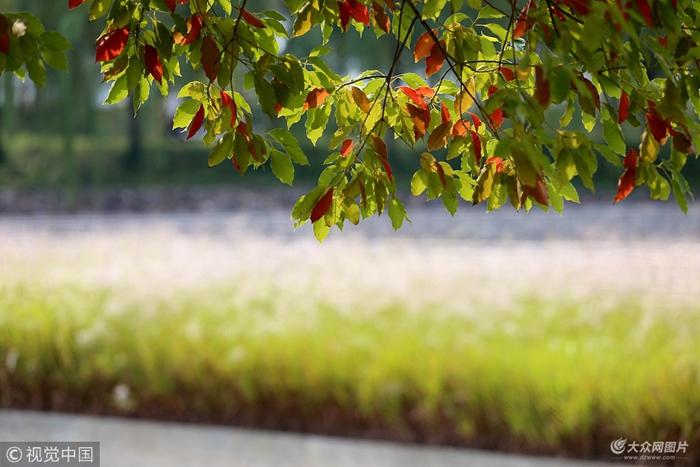 24节气手绘花卉 白露