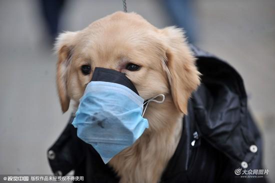 日本最可爱的狗