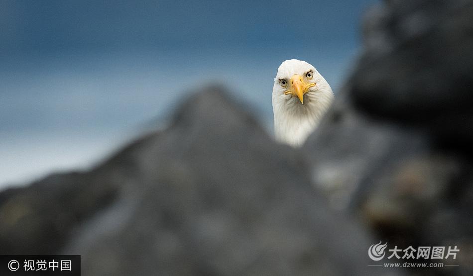 回顾趣味动物摄影奖比赛历年作品(下)