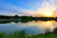 小清河湿地1.JPG
