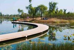 秋日湿地  作者:黄伟  13969160760  摄于济西湿地.jpg