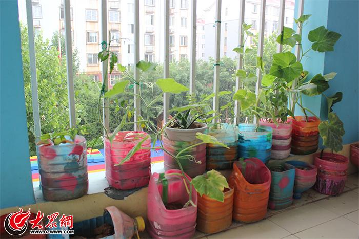 废旧物品变身花盆,幼儿体验绿植生长全过程